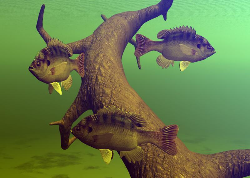 Topinsect fische for Was fressen teichfische
